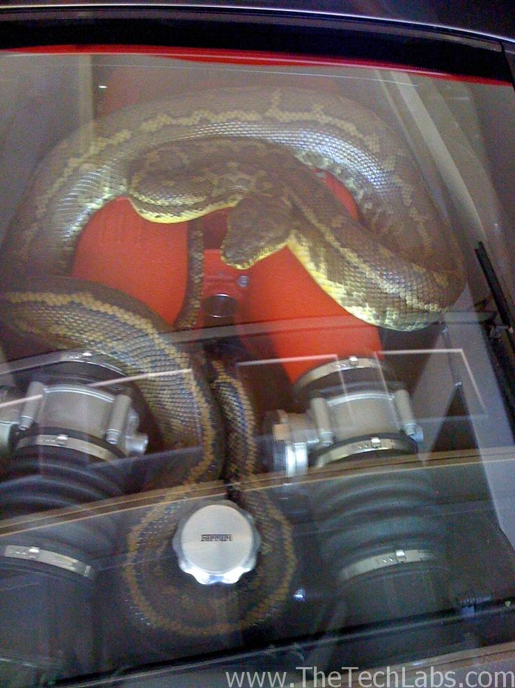Snake in Ferrari